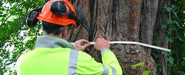 a man completing a tree survey